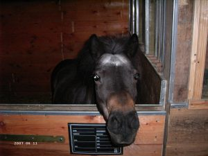 Das alte Pferd
