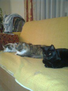 Katzen- und Heimtierpension