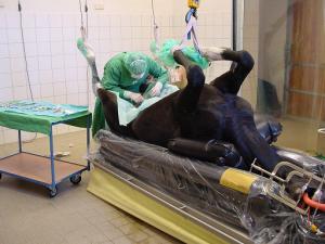 Kastration an der Klinik