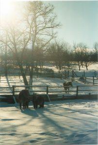 Abb. 1: Offenstallhaltung - im Winter