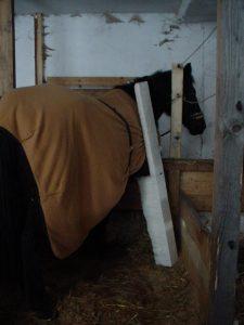 Abb 1: Radiusfissur / Haarriss Unterarm Stützverband mit stabilisierender Schiene rechts vorne Pferd ausgebunden
