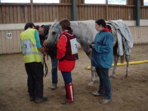 Fortbildung Distanzturnier-Tierarzt