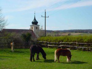 Pferdehaltung auf der Koppel
