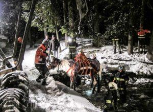 Pferd aus eisiger Not gerettet