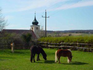 Pferde in ganzjähriger Offenstallhaltung
